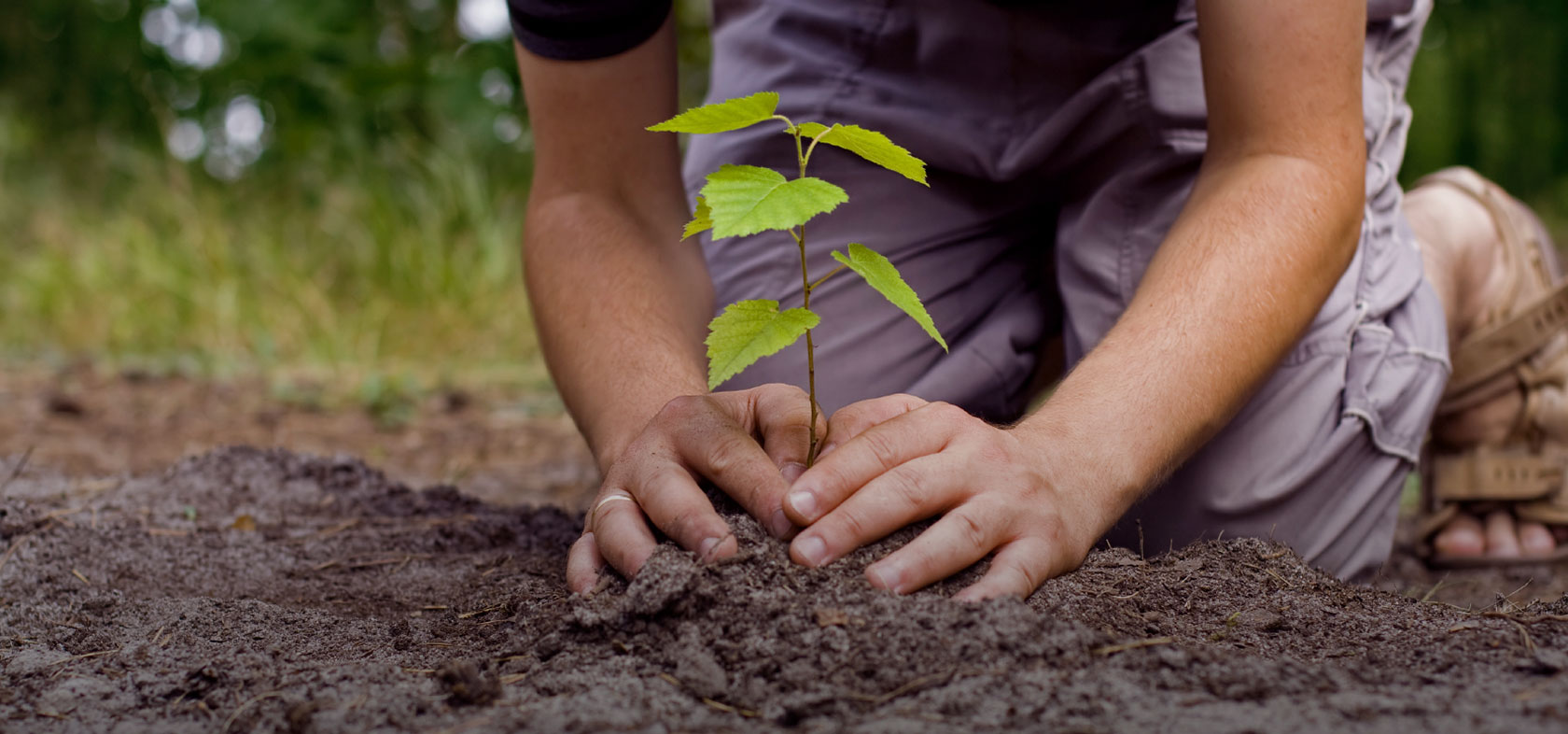 You Reap What You Sow (2 of 3) – Plant Well – Visible Child